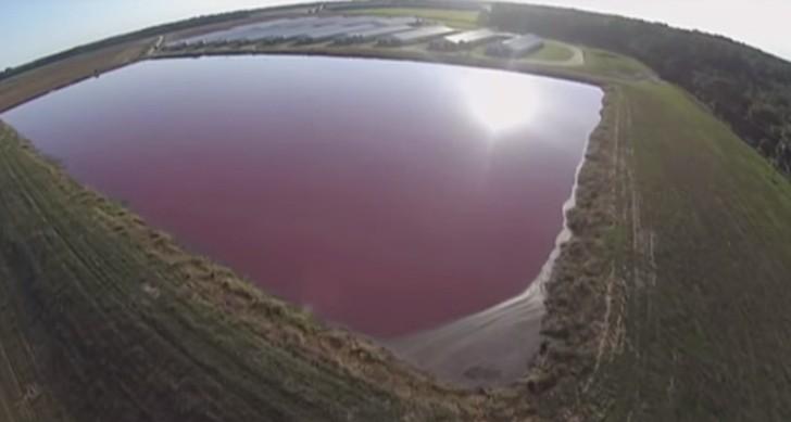 Drone sobrevolando granja de cerdos de Estados Unidos. Fuente: http://factoryfarmdrones.com